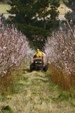 распылять урожая Стоковые Фото