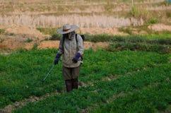 Распылять пестицидов Стоковая Фотография RF