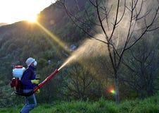Распылять трущоб грецкого ореха Стоковое фото RF
