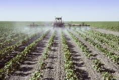 Распыляя молодые заводы хлопка в поле Стоковые Фото