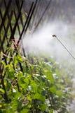 Распыляя пестицид стоковое изображение rf