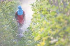 Распыляя пестицид стоковые фотографии rf