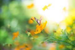 Расплывчатая предпосылка естественного света Стоковые Фото