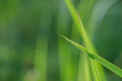 Расплывчатая предпосылка листьев зеленой травы Стоковое фото RF