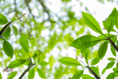 Расплывчатая природа и зеленые листья Стоковая Фотография