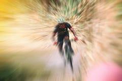 Расплывчатый спорта Одноколейный путь катания велосипедиста горного велосипеда и c Стоковое Изображение RF