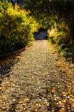 Рассветайте в лес Стоковые Фото