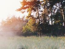Рассвет в лесе Стоковое Изображение RF