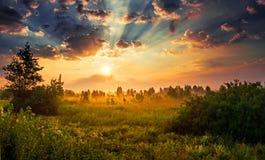 Рассвет в лужке Стоковые Изображения