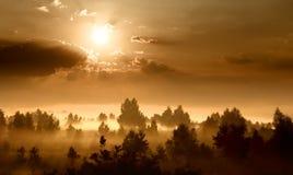 Рассвет в лужке стоковое изображение