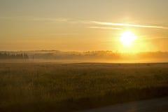 Рассвет в поле Стоковые Изображения RF