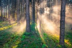 Рассвет в пуще стоковое фото