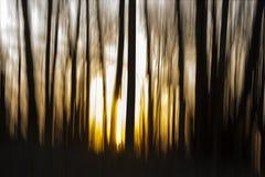 Рассвет в пуще стоковые изображения rf
