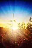 Рассвет в тростниках Стоковая Фотография