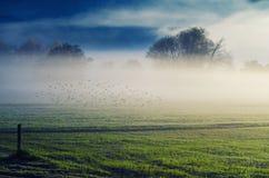 Рассвет в тумане Стоковое Изображение RF