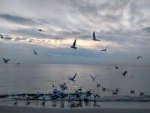 Рассвет в Чёрном море Чайки на море Стоковая Фотография
