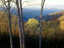Рассвет в Cherokee национальном лесе, больших закоптелых горах национальном парке, Северной Каролине Стоковые Изображения RF