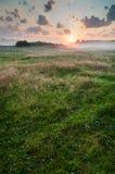 Рассвет лета туманный на луге Стоковые Изображения RF