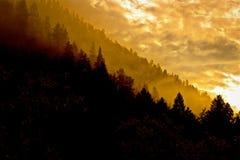 Рассвет, ели и сосны скалистой горы Стоковые Изображения RF