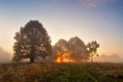 Рассвет живописного ландшафта осени туманный в роще дуба на m Стоковые Изображения