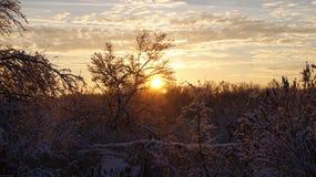 Рассвет над кустами снега стоковые фотографии rf