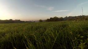 Рассвет на реке, дым Dron видео- на воде видеоматериал