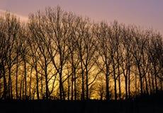 Рассвет дня Нового Года Стоковое Изображение RF