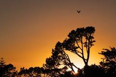 Рассвет одно из явлений которые привлекают внимание стоковые фото