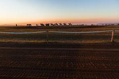 Рассвет лошадей Silhouetted всадниками Стоковое Фото