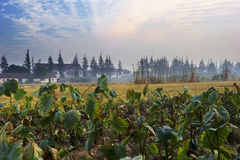 рассвет сельской местности Стоковые Фотографии RF