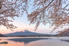 Рассвет Mt весны fuji стоковая фотография rf