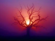 рассвет somerset Стоковое фото RF