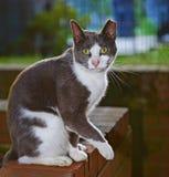 Рассеянная жизнь котов Стоковые Фотографии RF