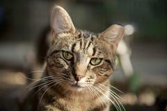 Рассеянная жизнь котов Стоковое Фото