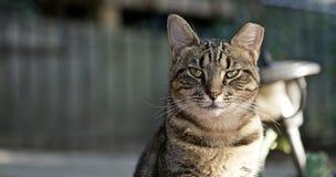 Рассеянная жизнь котов Стоковое фото RF
