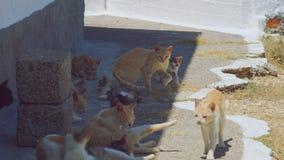 Рассеянная семья кота в тени в Греции стоковые фото