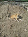 Рассеянная собака стоковое изображение