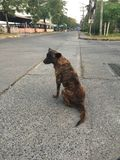 Рассеянная собака Стоковое Фото