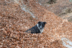 Рассеянная собака Стоковое Изображение RF