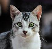 Рассеянные коты стоковое изображение rf