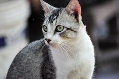 Рассеянные коты стоковая фотография rf