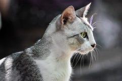 Рассеянные коты стоковые изображения rf