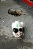 Рассеянные котята 6 Стоковое Изображение RF