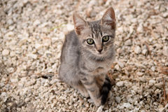 Рассеянный котенок стоковое изображение