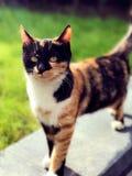 Рассеянный кот вытаращить на камере Стоковая Фотография