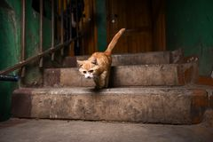 Рассеянный кот в лестничном колодце стоковое фото rf