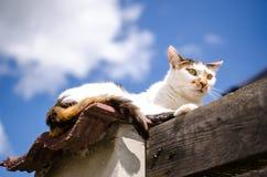 Рассеянный кот на загородке Стоковые Изображения RF