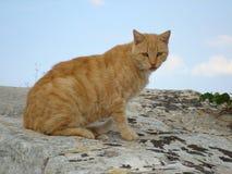 Рассеянный кот на каменной стене города Стоковое фото RF