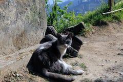 Рассеянный кот на крае города Стоковая Фотография