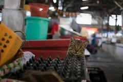 Рассеянный кот на местном рынке смотря камеру Стоковые Изображения RF